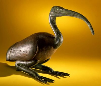 Птица ибис