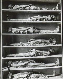 Мумии священников в музее Гизы в 1894 году