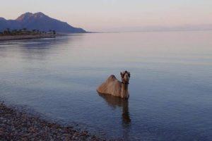 Сфинкс в воде