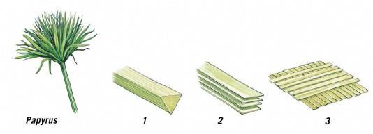 Этапы изготовления бумаги из папирусной тростинки