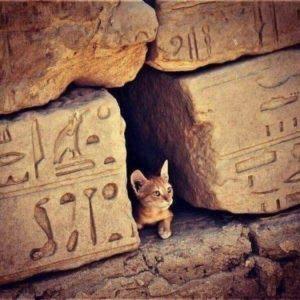 Кот Египта