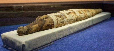 мумия крокодила